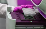 Mycoplasma Detection Kits - Conventional PCR
