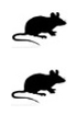 Mouse - Mouse