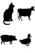 Primary cells - Other species