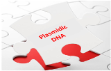 Plasmidic DNA