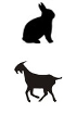 Goat - Rabbit
