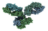 Antibody arrays
