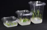 Plastic vessels