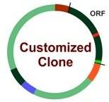 Custom service : Clone modification