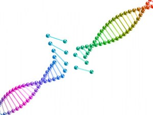 Custom service : Gene synthesis
