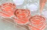 In vitro efficacy testing