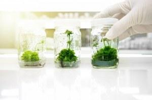 Hochwertige Medien und Behälter für die Pflanzenkultur