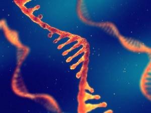 Custom service : mRNA synthesis