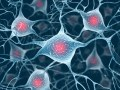 NeuroDoWo 2018 - Neurobiology Doctoral Students Workshop