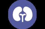 Primary antibodies for immunohistochemistry CE/IVD - Genitourinary pathology