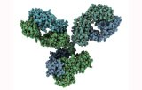 Primary antibodies for immunohistochemistry CE/IVD