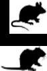 Multi-species