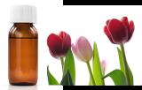 Tulipa gesneriana (TxLC-I)
